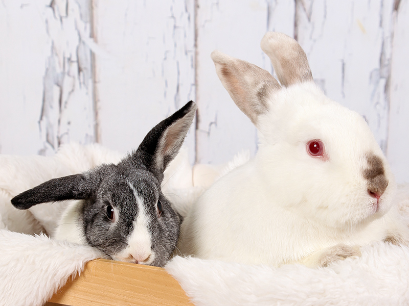 Izzy & Loki