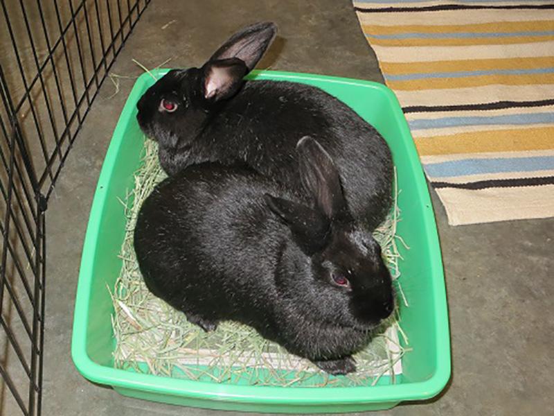 Hoppy & Ginger