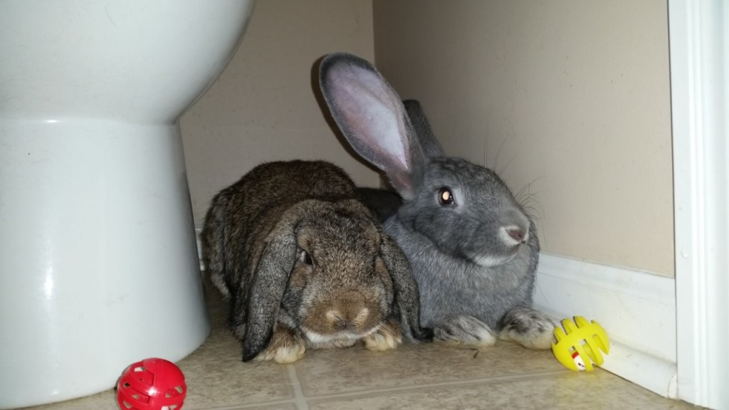 Bear and Lady Bun