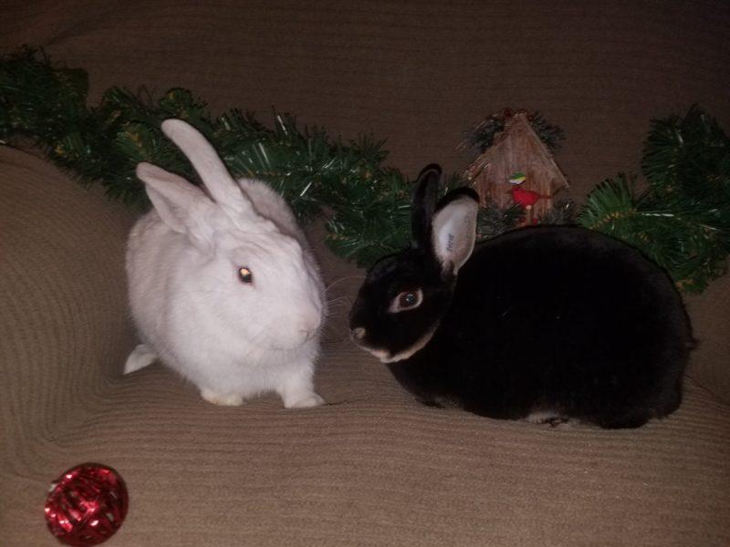 Willow & Steve