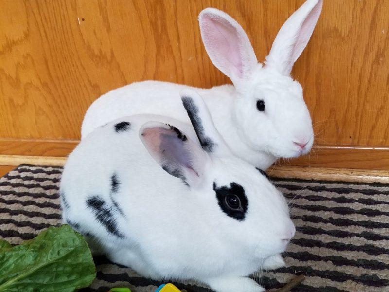 Kip & Olivia
