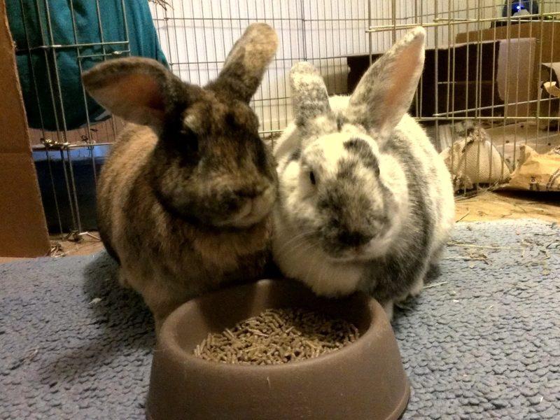 Astro & Georgie