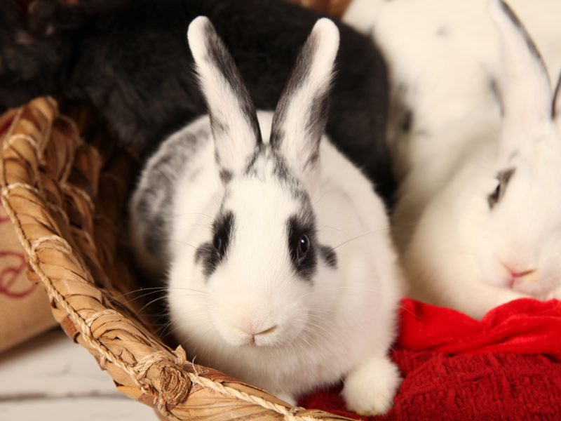 Flopsy (Bonded with Roxy)