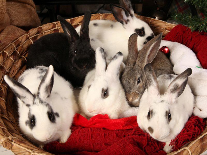 Barn Bunny Babies (Peter, Nugget, Rocky, Flopsy, Topsy, Mopsy)