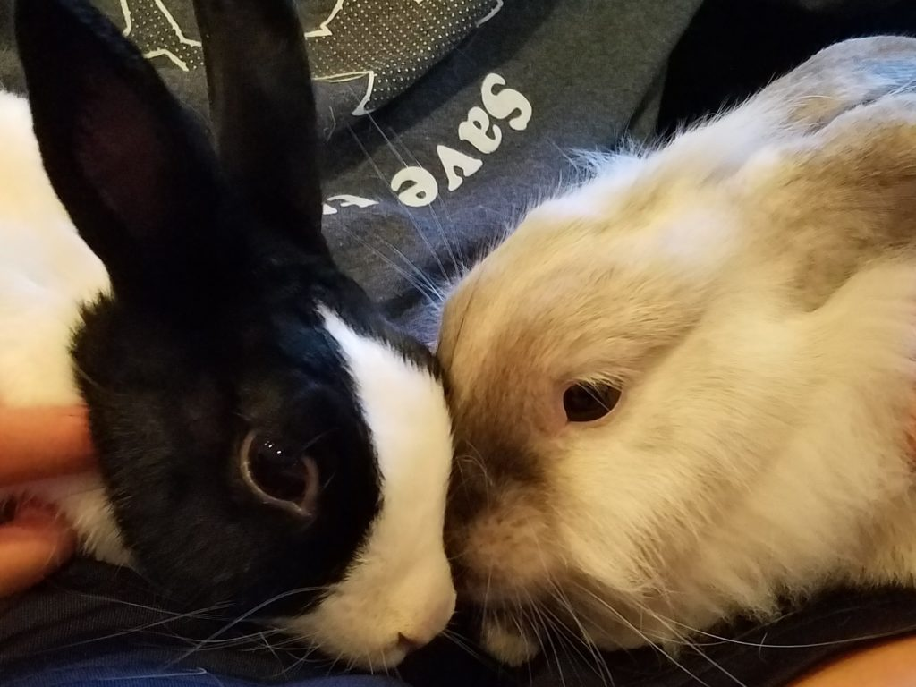 Pez & Macy (Adoption Pending)