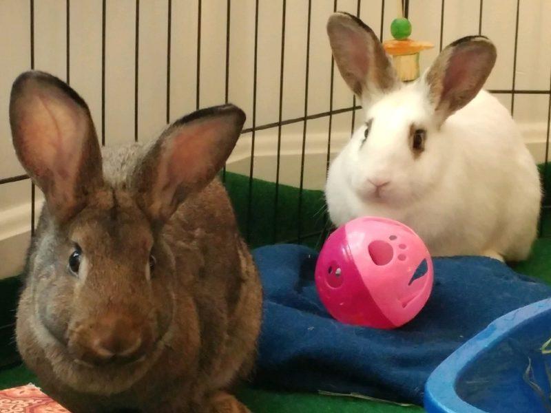 Ava & Allie (Adoption Pending)