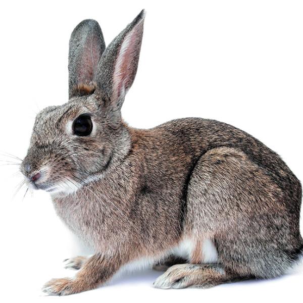 bunny sitting mohrs